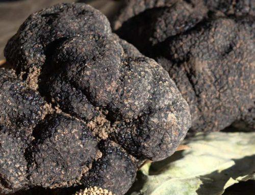 The autumn truffle: hidden treasure
